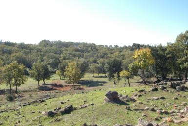 534 OPG Fincas Rústicas SurOeste 4 385x258 - Espectacular finca de recreo y caza en la Vera de Cáceres, 450 ha