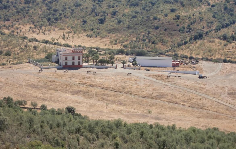 541 OPM Fincas Rústicas SurOeste 1 1170x738 - Bonita finca de recreo, caza y ganadera de 170 has en la zona de Zafra (Badajoz)