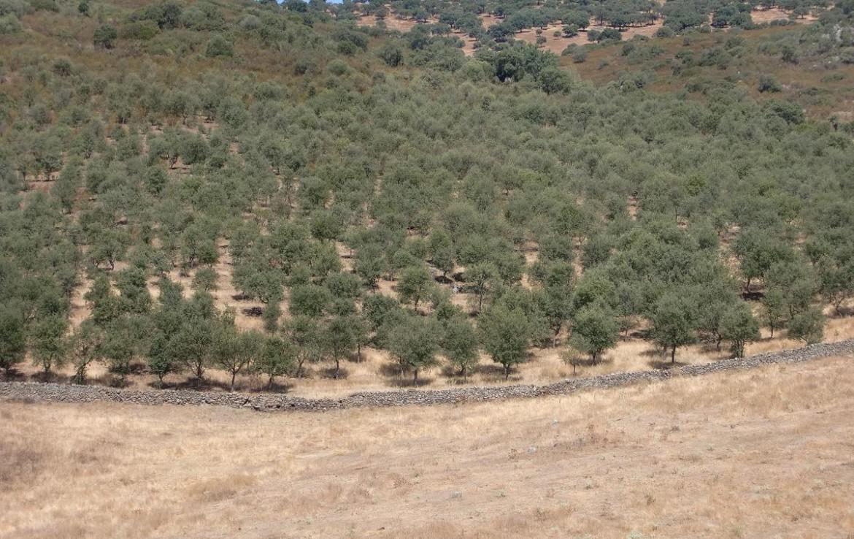 541 OPM Fincas Rústicas SurOeste 2 1170x738 - Bonita finca de recreo, caza y ganadera de 170 has en la zona de Zafra (Badajoz)