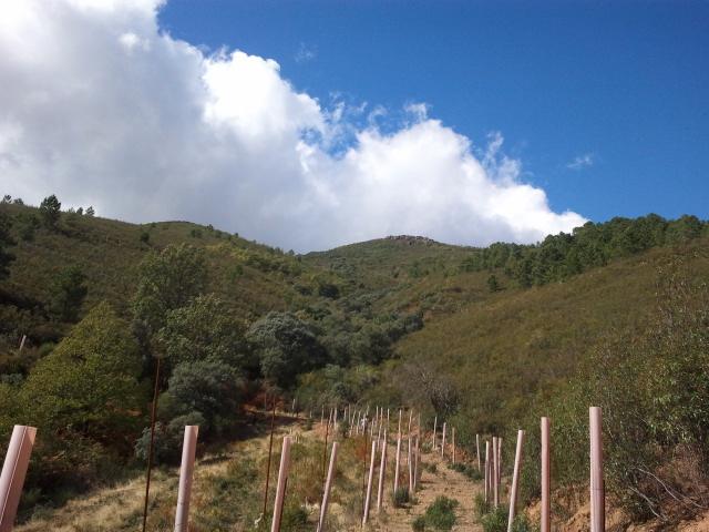 591 OPP Fincas Rústicas SurOeste 2 - Finca de caza y recreo de 55 hectáreas cerca de Guadalupe