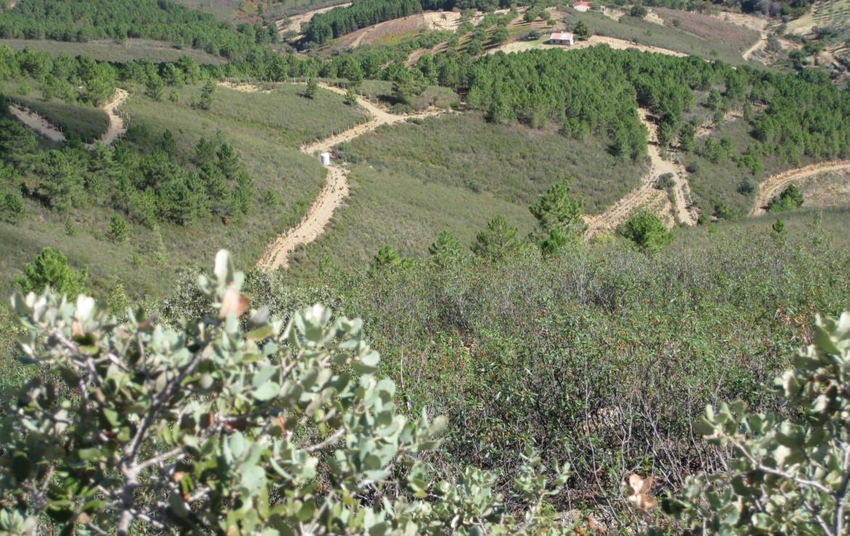 591 OPP Fincas Rústicas SurOeste 5 1170x738 - Finca de caza y recreo de 55 hectáreas cerca de Guadalupe