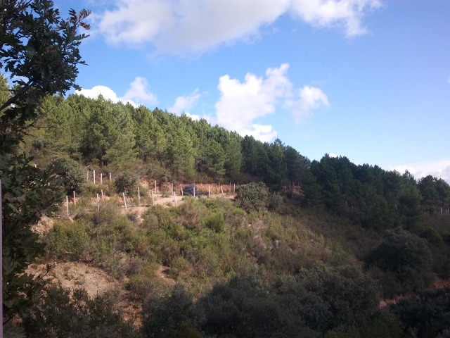 591 OPP Fincas Rústicas SurOeste - Finca de caza y recreo de 55 hectáreas cerca de Guadalupe