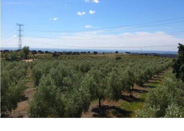 675 OPP Fincas Rústicas SurOeste 4 - Finca de 70 has a 27 km de Sevilla, en Sierra Norte