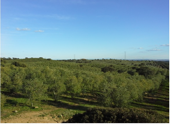675 OPP Fincas Rústicas SurOeste 5 - Finca de 70 has a 27 km de Sevilla, en Sierra Norte