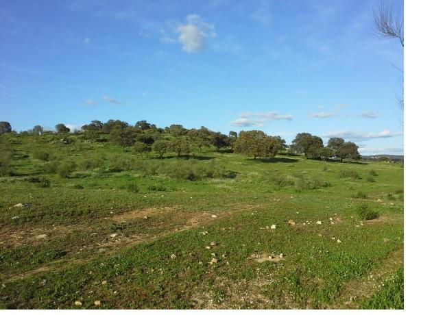 675 OPP Fincas Rústicas SurOeste 6 - Finca de 70 has a 27 km de Sevilla, en Sierra Norte