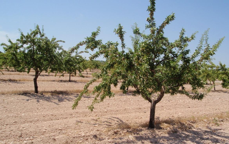 717 OPP Fincas Rústicas SurOeste 1 1170x738 - Finca de labor y regadío en provincia de Murcia de unas 70 has con viñas en espaldera, almendros, riego por goteo