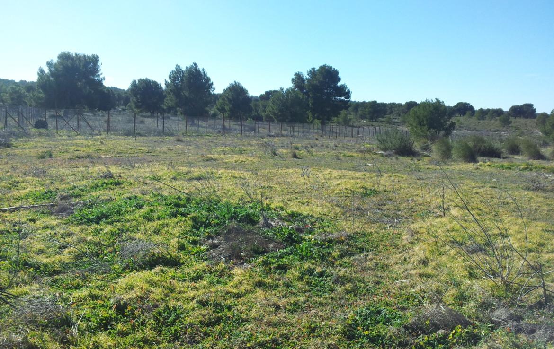 717 OPP Fincas Rústicas SurOeste 2 1170x738 - Finca de labor y regadío en provincia de Murcia de unas 70 has con viñas en espaldera, almendros, riego por goteo