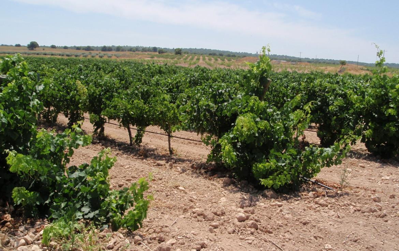 717 OPP Fincas Rústicas SurOeste 3 1170x738 - Finca de labor y regadío en provincia de Murcia de unas 70 has con viñas en espaldera, almendros, riego por goteo