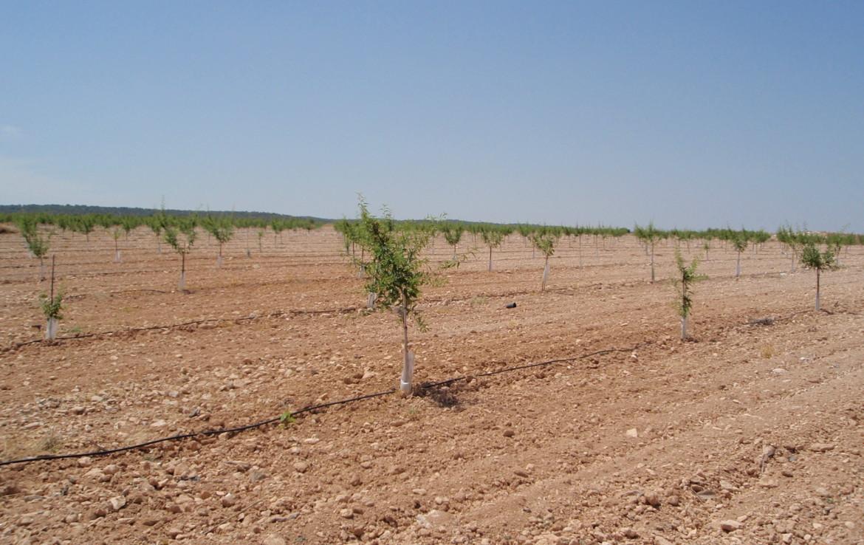 717 OPP Fincas Rústicas SurOeste 4 1170x738 - Finca de labor y regadío en provincia de Murcia de unas 70 has con viñas en espaldera, almendros, riego por goteo