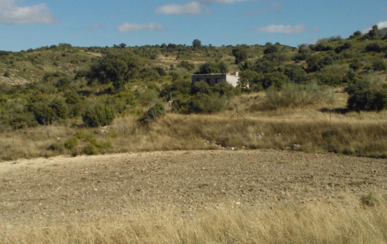 756 OPP Fincas Rústicas SurOeste 1 1170x738 - Bonita finca de 65 has en provincia de Guadalajara, de monte alto con encinas