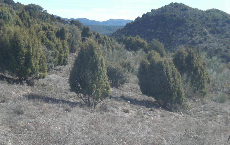 756 OPP Fincas Rústicas SurOeste 1170x738 - Bonita finca de 65 has en provincia de Guadalajara, de monte alto con encinas
