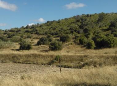 756 OPP Fincas Rústicas SurOeste 2 380x280 - Bonita finca de 65 has en provincia de Guadalajara, de monte alto con encinas