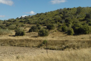 756 OPP Fincas Rústicas SurOeste 2 385x258 - Bonita finca de 65 has en provincia de Guadalajara, de monte alto con encinas