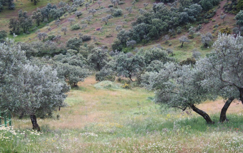 865 OPP Fincas Rústicas SurOeste 4 1170x738 - Finca de 32 has en el Valle de los Pedroches (Córdoba)