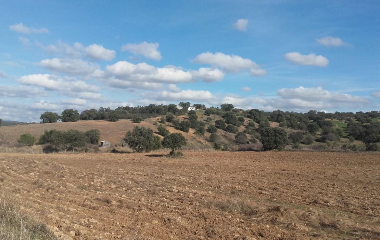 930 OPP Fincas Rústicas SurOeste 1 1170x738 - Finca de 65 hectáreas dehesa en zona de Hornachos, registro porcino