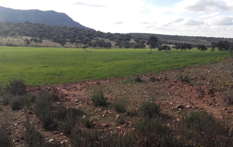 930 OPP Fincas Rústicas SurOeste 1170x738 - Finca de 65 hectáreas dehesa en zona de Hornachos, registro porcino