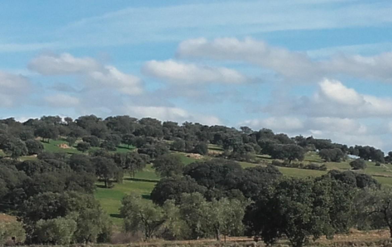 930 OPP Fincas Rústicas SurOeste 2 1170x738 - Finca de 65 hectáreas dehesa en zona de Hornachos, registro porcino