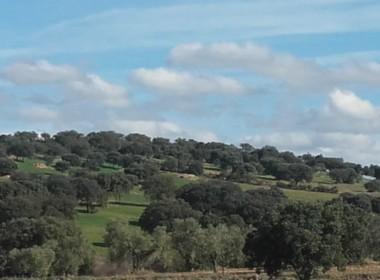 930 OPP Fincas Rústicas SurOeste 2 380x280 - Finca de 65 hectáreas dehesa en zona de Hornachos, registro porcino