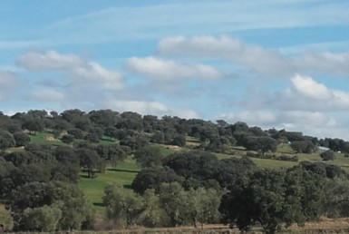 930 OPP Fincas Rústicas SurOeste 2 385x258 - Finca de 65 hectáreas dehesa en zona de Hornachos, registro porcino