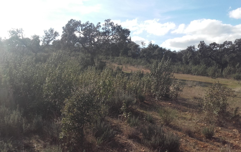 930 OPP Fincas Rústicas SurOeste 3 1170x738 - Finca de 65 hectáreas dehesa en zona de Hornachos, registro porcino