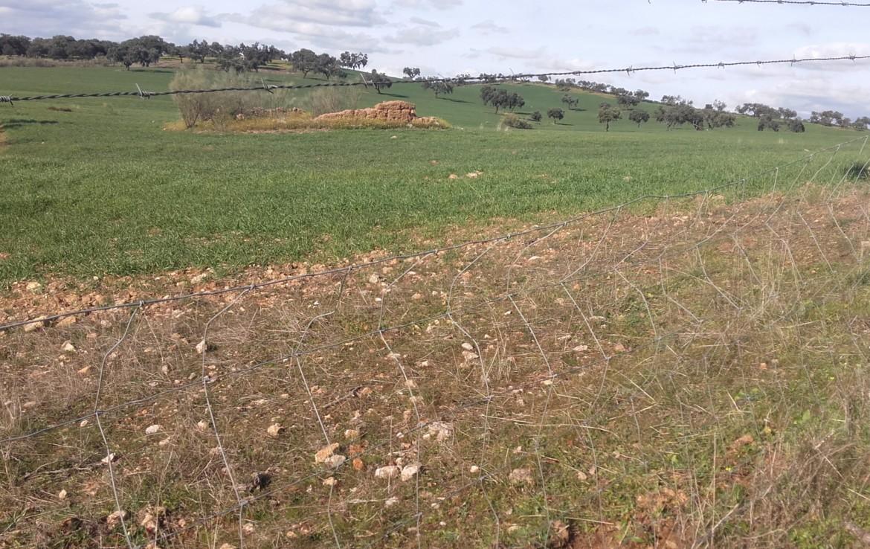 930 OPP Fincas Rústicas SurOeste 4 1170x738 - Finca de 65 hectáreas dehesa en zona de Hornachos, registro porcino