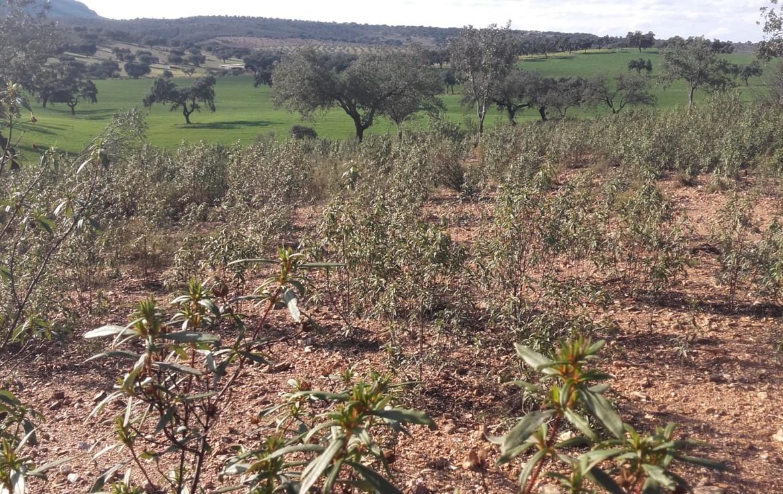 930 OPP Fincas Rústicas SurOeste 5 1170x738 - Finca de 65 hectáreas dehesa en zona de Hornachos, registro porcino