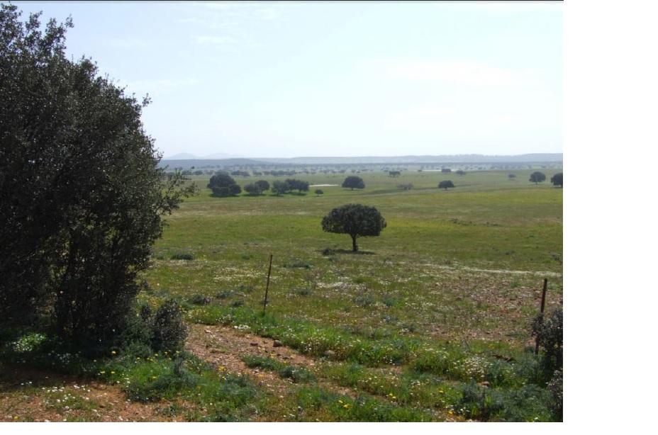 955 OPG Fincas Rústicas SurOeste 5 - Dehesa cerca de Mérida, 340 has de pastos, encinas y labor