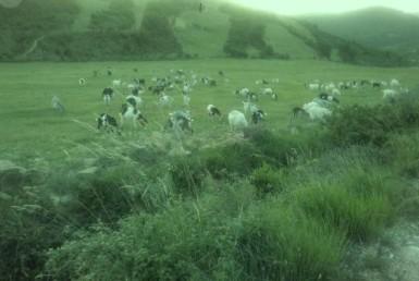 1044 OPG Fincas Rústicas SurOeste 3 385x258 - Finca de 225 hectáreas en Navarra, 100 has de pradera cultivables. Mucha agua, naves e instalaciones