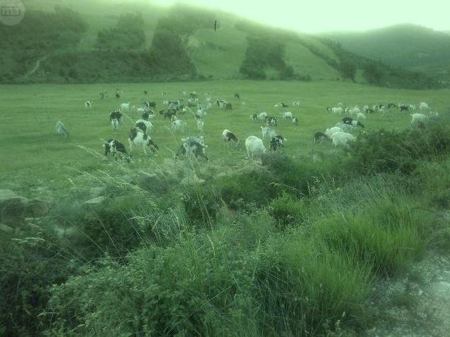 1044 OPG Fincas Rústicas SurOeste 3 - Finca de 225 hectáreas en Navarra, 100 has de pradera cultivables. Mucha agua, naves e instalaciones