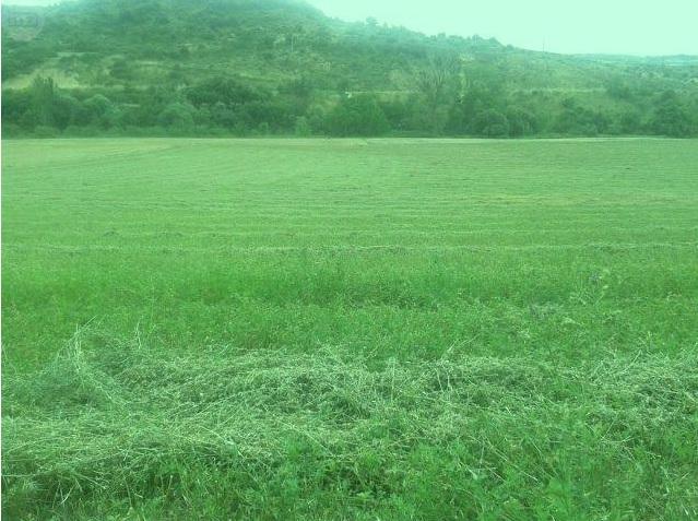 1044 OPG Fincas Rústicas SurOeste - Finca de 225 hectáreas en Navarra, 100 has de pradera cultivables. Mucha agua, naves e instalaciones