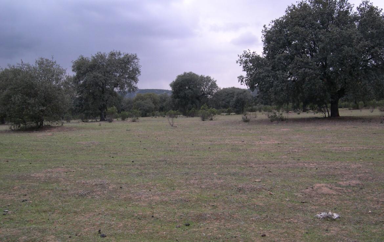 1012 OPG Fincas Rústicas SurOeste 1 1170x738 - Finca de 220 hectáreas zona Chillón (Ciudad Real), ganadera, encinas, caza, nave y agua