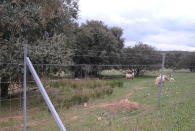 1012 OPG Fincas Rústicas SurOeste 385x258 - Finca de 220 hectáreas zona Chillón (Ciudad Real), ganadera, encinas, caza, nave y agua