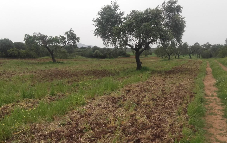 1055 OPG Fincas Rústicas SurOeste 2 1170x738 - Preciosa finca de 164 hectáreas de dehesa y labor, cercana a Mérida