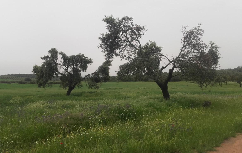 1055 OPG Fincas Rústicas SurOeste 3 1170x738 - Preciosa finca de 164 hectáreas de dehesa y labor, cercana a Mérida