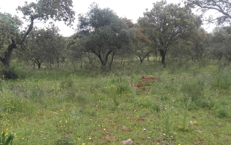 1055 OPG Fincas Rústicas SurOeste 5 1170x738 - Preciosa finca de 164 hectáreas de dehesa y labor, cercana a Mérida