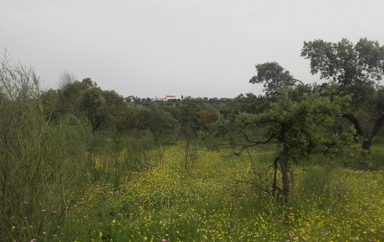 1055 OPG Fincas Rústicas SurOeste 6 1170x738 - Preciosa finca de 164 hectáreas de dehesa y labor, cercana a Mérida