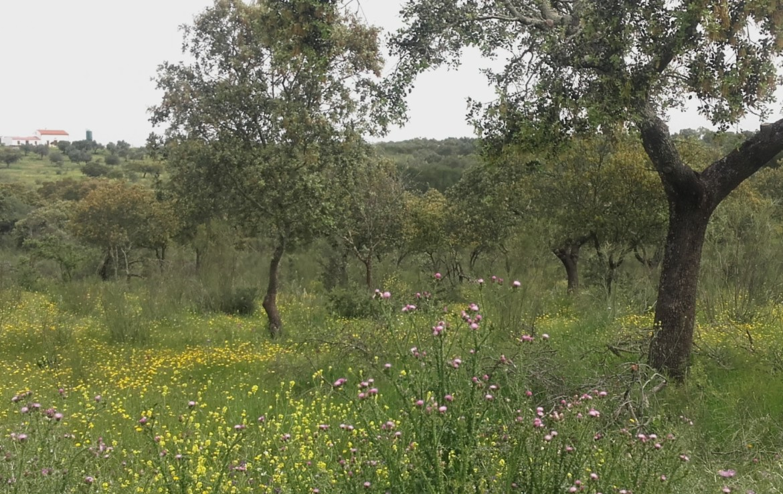 1055 OPG Fincas Rústicas SurOeste 7 1170x738 - Preciosa finca de 164 hectáreas de dehesa y labor, cercana a Mérida