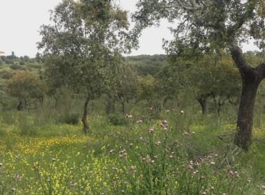 1055 OPG Fincas Rústicas SurOeste 7 380x280 - Preciosa finca de 164 hectáreas de dehesa y labor, cercana a Mérida