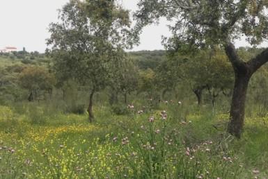 1055 OPG Fincas Rústicas SurOeste 7 385x258 - Preciosa finca de 164 hectáreas de dehesa y labor, cercana a Mérida