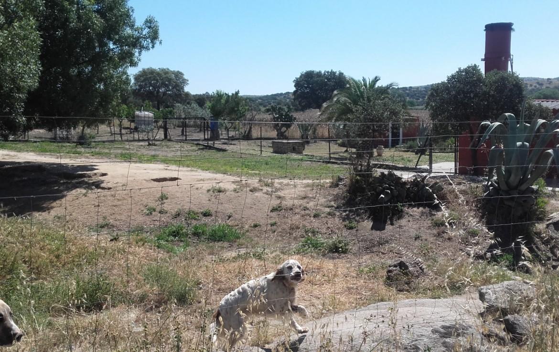 1058 OPP Fincas Rústicas SurOeste 4 1170x738 - Parcela de 4.5 hectáreas a diez minutos de Mérida. Vega de rio, casa 100m2, ideal caballos, o cultivo en secano o regadío
