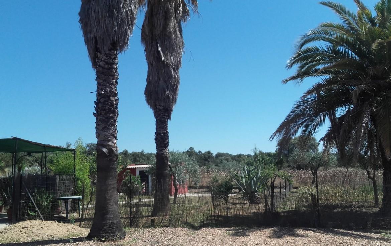 1058 OPP Fincas Rústicas SurOeste 5 1170x738 - Parcela de 4.5 hectáreas a diez minutos de Mérida. Vega de rio, casa 100m2, ideal caballos, o cultivo en secano o regadío