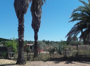 1058 OPP Fincas Rústicas SurOeste 5 380x280 - Parcela de 4.5 hectáreas a diez minutos de Mérida. Vega de rio, casa 100m2, ideal caballos, o cultivo en secano o regadío