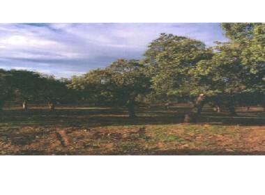 3 380x280 - Finca de caza de 600 hectáreas entre Navalmoral y Guadalupe, mucha caza, cortijo.