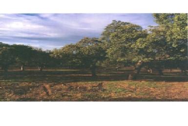 3 385x258 - Finca de caza de 600 hectáreas entre Navalmoral y Guadalupe, mucha caza, cortijo.