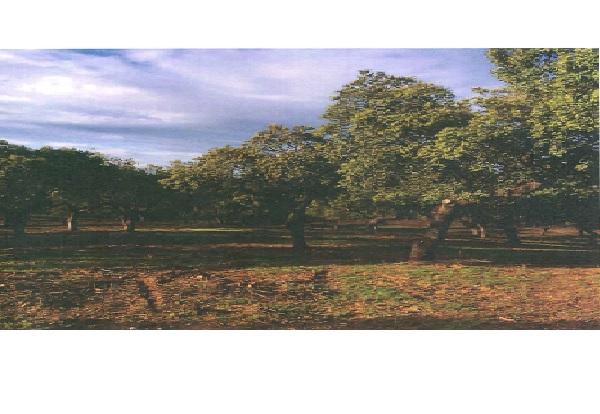 3 - Finca de caza de 600 hectáreas entre Navalmoral y Guadalupe, mucha caza, cortijo.