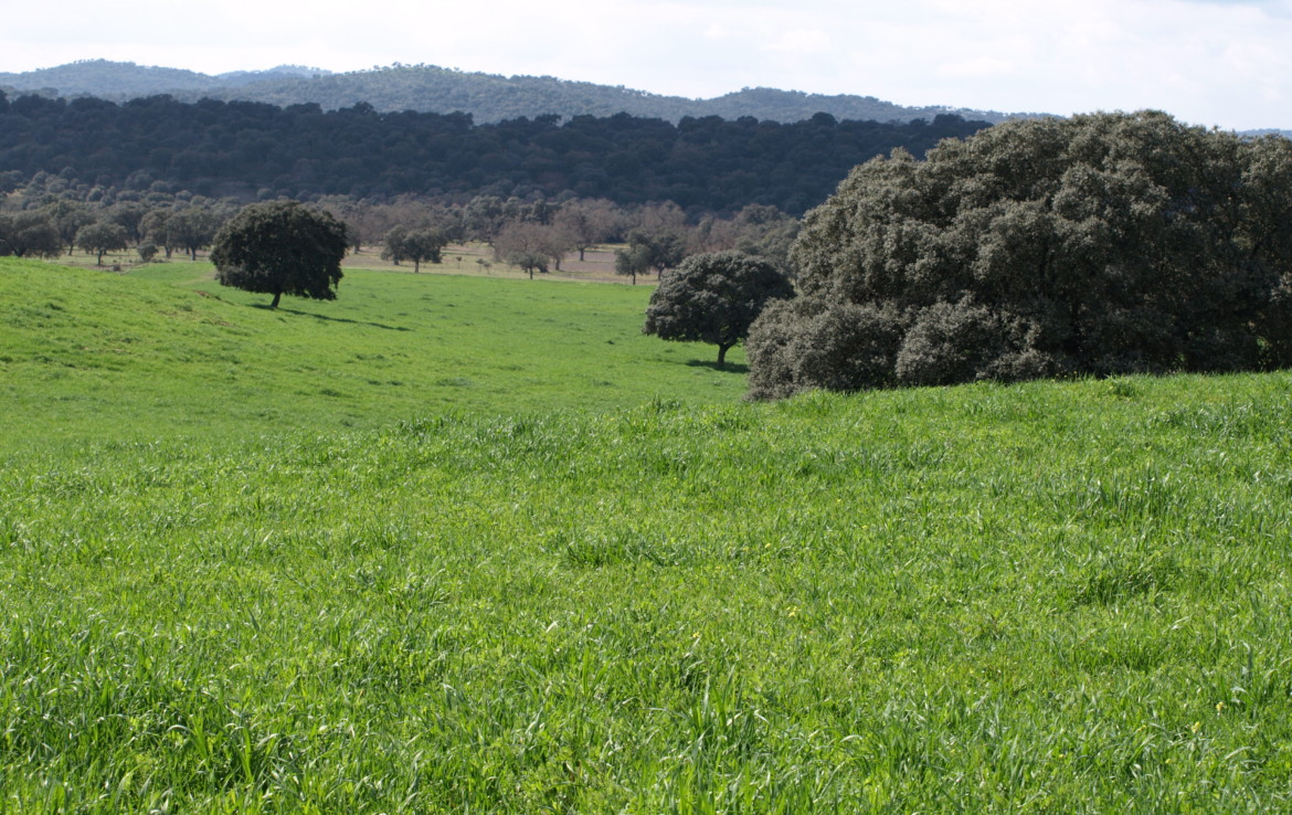 578 OPG varias Sierra Norte Sevilla 1 1170x738 - Preciosas fincas de dehesa, recreo y ganaderas en Sierra Norte de Sevilla. Desde 100 hasta 1.000 hectáreas