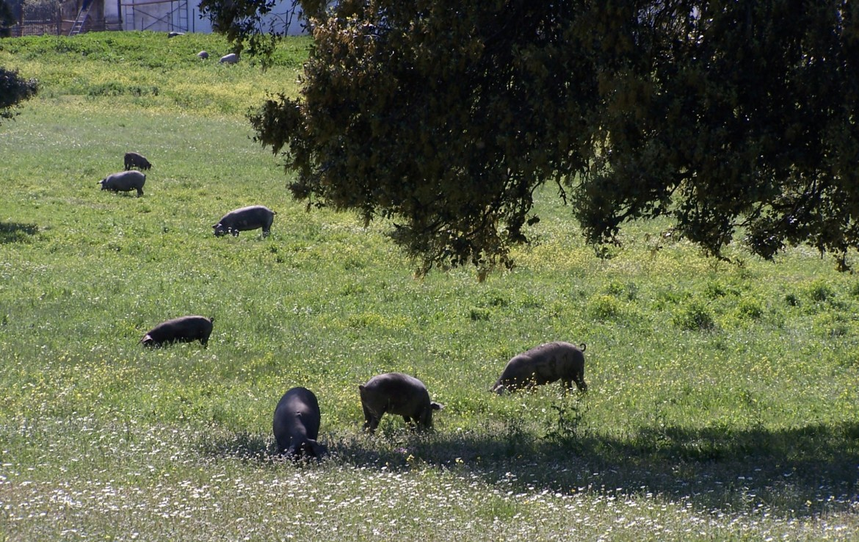 578 OPG varias Sierra Norte Sevilla 3 1170x738 - Preciosas fincas de dehesa, recreo y ganaderas en Sierra Norte de Sevilla. Desde 100 hasta 1.000 hectáreas