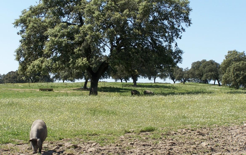 578 OPG varias Sierra Norte Sevilla 4 1170x738 - Preciosas fincas de dehesa, recreo y ganaderas en Sierra Norte de Sevilla. Desde 100 hasta 1.000 hectáreas