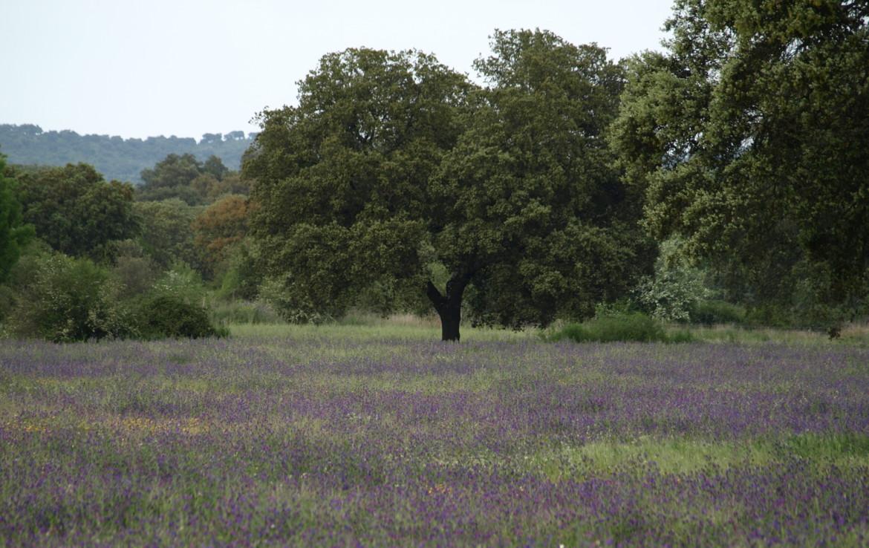 578 OPG varias Sierra Norte Sevilla 5 1170x738 - Preciosas fincas de dehesa, recreo y ganaderas en Sierra Norte de Sevilla. Desde 100 hasta 1.000 hectáreas