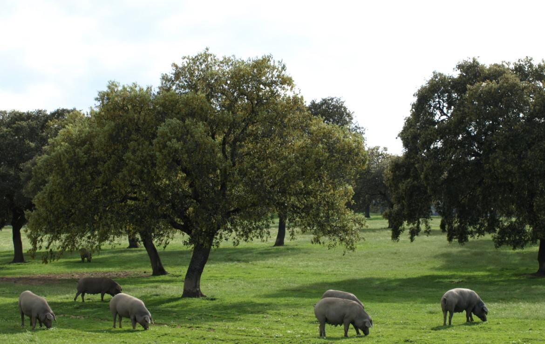 578 OPG varias Sierra Norte Sevilla 6 1170x738 - Preciosas fincas de dehesa, recreo y ganaderas en Sierra Norte de Sevilla. Desde 100 hasta 1.000 hectáreas